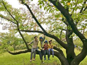 森遊びイメージ