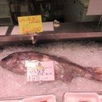 幻の魚 いざなぎ