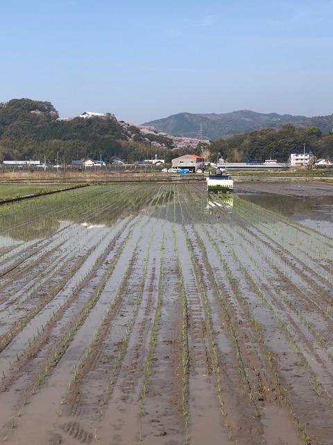 田植え風景の写真
